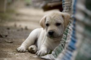 El equipo de futbol Colo- Colo promueve la adopción de perros