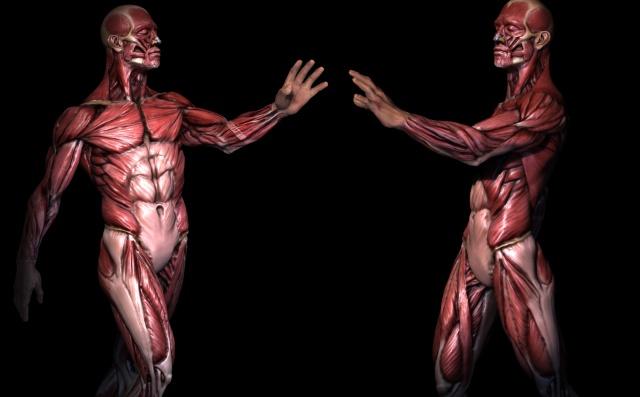 Estos son los 7 órganos que te