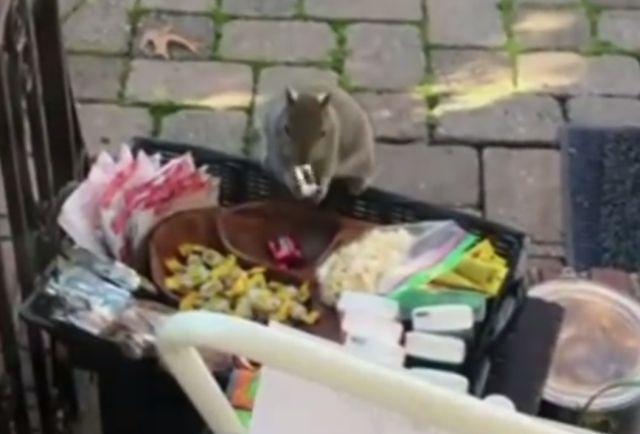 Una familia dejó detalles para los carteros y el animal hizo de las suyas